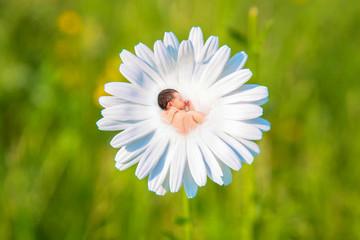 Newborn baby sleeps in white daisy flower.