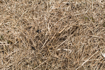 Dry grass close-up, hay texture.