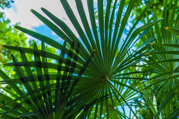 Palm leaves close-up against a tropical sky and trees