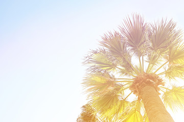 Retro toned image of beautiful exotic californian coconut palm tree tops with big leaves on the summer sky background. Tropical plants in California. Vintage sunset filter. Copy space, bottom view.