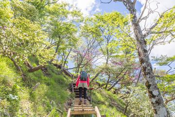新緑の山をハイキングする人