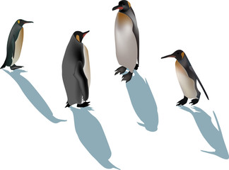 four penguins with shadows on white