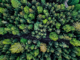 pine trees from above strong green