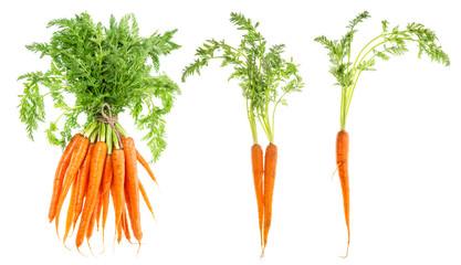 Fototapeta Carrot vegetable green leaves Food objects obraz