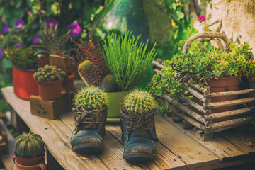 Creative photography of cactus in old shoes on a wooden bench