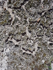 Moss texture on cement