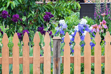 Picket Fence by Colorful Iris Flowers in  Backyard Garden