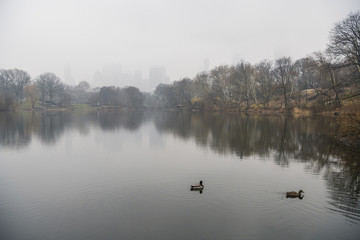 Ducks swimming on lake by bare trees against sky during foggy weather