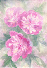 Pink peonies. Watercolor artwork