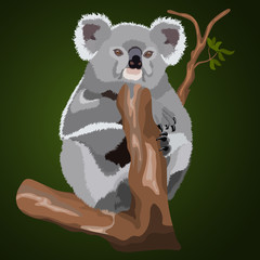 Fluffy realistic koala on a branch, isolated, dark green background