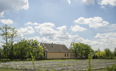 An organic farm life