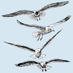 Hand drawings of the flying seagulls
