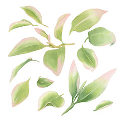 Set of tropical leaves on isolated white background