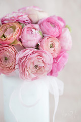 Photograph of a bouquet of sherbet colored ranunculus in a white vase