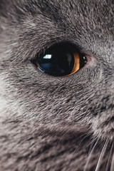 cat, animal, pet, kitten, feline, cute, domestic, eyes, portrait, kitty, fur, black, white, beautiful, isolated, face, young, mammal, gray, whiskers, pets, eye, looking, tabby, curious
