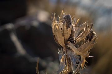 Macro seco