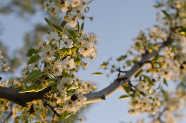 A few white flower buds growing on the branches of the trees in the park.
