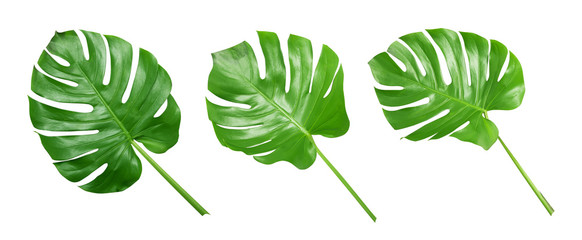Tropical green leaves on white background