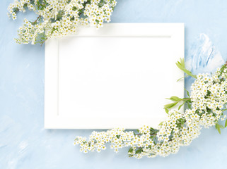 White flowers over the frame on blue concrete background. Backdrop with copy space
