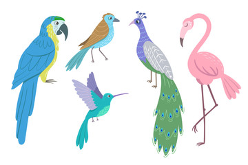 Set of beautiful birds on white background. Peacock, parrot ara, hummingbird, flamingo. Vector illustration.