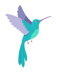Hummingbird on white background. Vector illustration.
