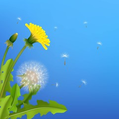 Dandelion bush flying seeds blue background. Stylized poster on theme of nature, flowers and plants. Vector illustration of relax image