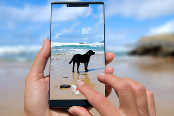 Woman with mobile phone photos dog on the beach.