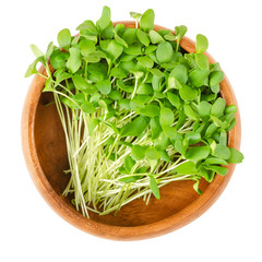 Flax microgreens in wooden bowl. Shoots of Linum also called common flax or linseed. Edible sprouts, green seedlings, young plants and cotyledons. Macro food photo closeup from above over white.
