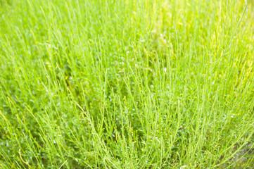 grass green texture natural summer