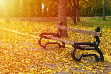 Empty bench in the autumnal park on background of yellow fallen leaves and avenues with trees and thujas with sunlight. Loneliness, sadness, autumn depression concept