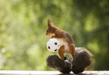 red squirrel is standing on sneakers with a ball