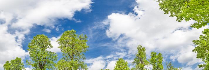青空と新緑の木