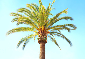 Travel, tourism, vacation, nature and summer holidays concept - palm tree on blue sky background
