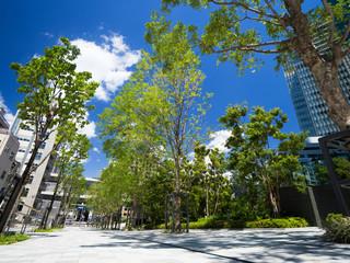 Fototapete - 新緑のオフィス街
