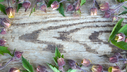 rectangular frame (pattern) of purple flowers Pulsatílla pátens and green leaves on an old wooden background, beautiful tender flower arrangement, rustic style