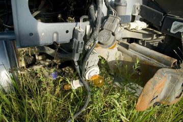 blue chicory under broken car lamp