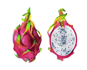 watercolor illustration of pitahaya. Isolated dragon fruit for label, menu, icon. Watercolor Hand painted fruits on white background. Whole and half of pink fruit