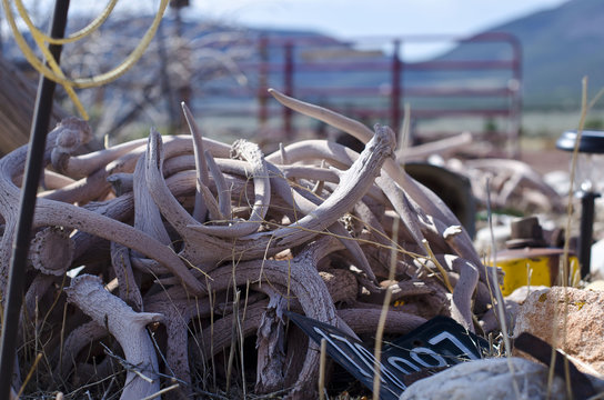 A stack of antlers on the ground of the desert rock garden of the utah countryside.