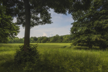 single tree in summer in front of a large meadow surrounded by forest