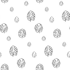 Vector botanical illustration of monstera leaf