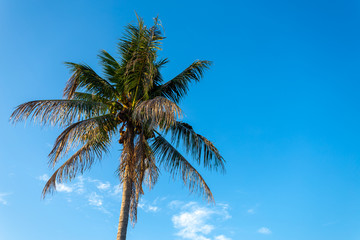 Coconut tree with beautiful blue sky background.