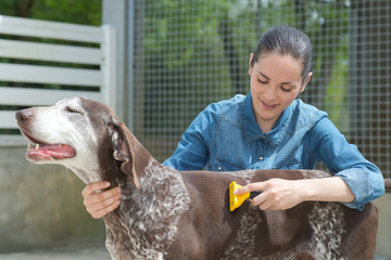 female vet stroking dog at animal shelter
