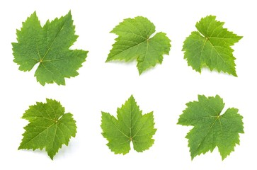 Fototapete - collection of green grape leaves isolated on white background