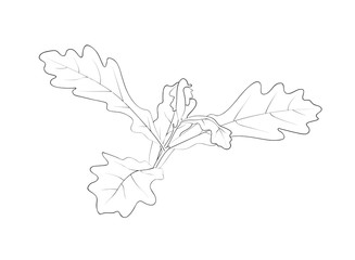 Vector illustration, isolated small sapling oak tree in black and white colors, outline hand painted drawing