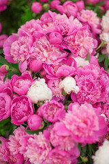 beautiful fresh peonies at the weekly market, can be used as background