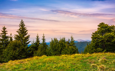 forested hills over the Brustury valley at dusk. gorgeous mountainous landscape, TransCarpathia, Ukraine