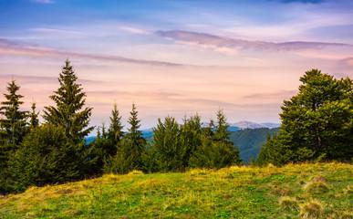 forested hills over the Brustury valley at dusk. gorgeous mountainous landscape, TransCarpathia, Ukraine