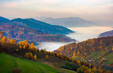 beautiful autumn dawn in mountainous rural area. yellow foliage on trees and fog in the distant valley