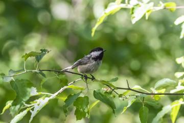 Cute little bird on a branch