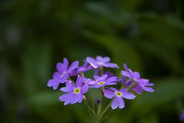 Flowers on a dark green background - the beginning of summer